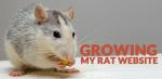 Growing my Rat Website: How Human Proof Design Website Is Doing