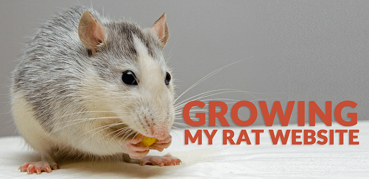 Growing my Rat Website: How Human Proof Design Website Is Doing