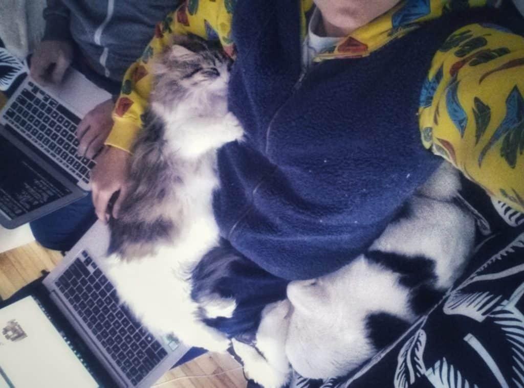 November 2017 Income Report - kitties 2