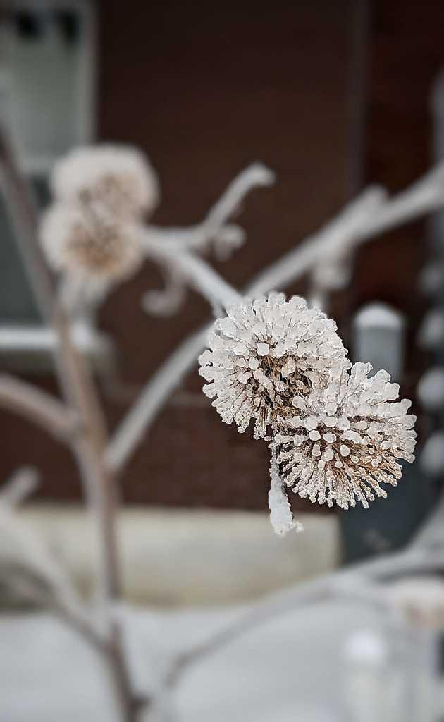 january february income report - freezing rain