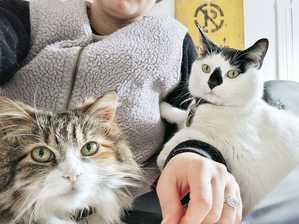 mar apr income report - cats