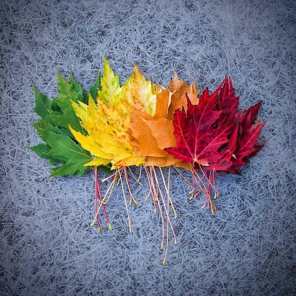 Gorgeous autumn leaves